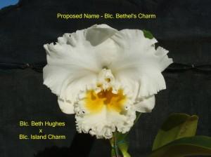 Blc. Bethel's Charm