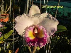Blc. Burdekin News (2)