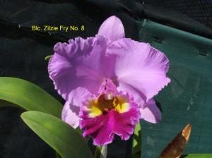 Blc. Zilzie Fry No. 8
