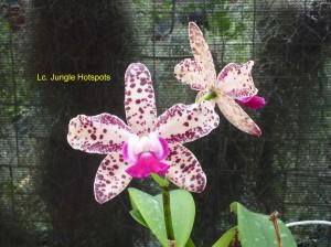 Lc. Jungle Hotspots