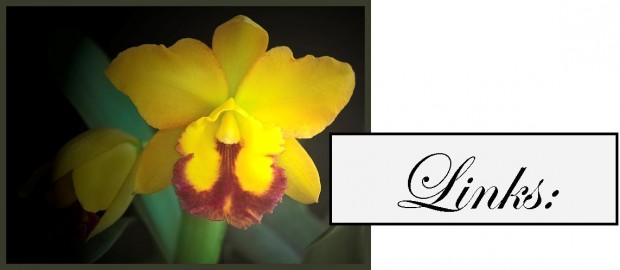 orchid yellow for links