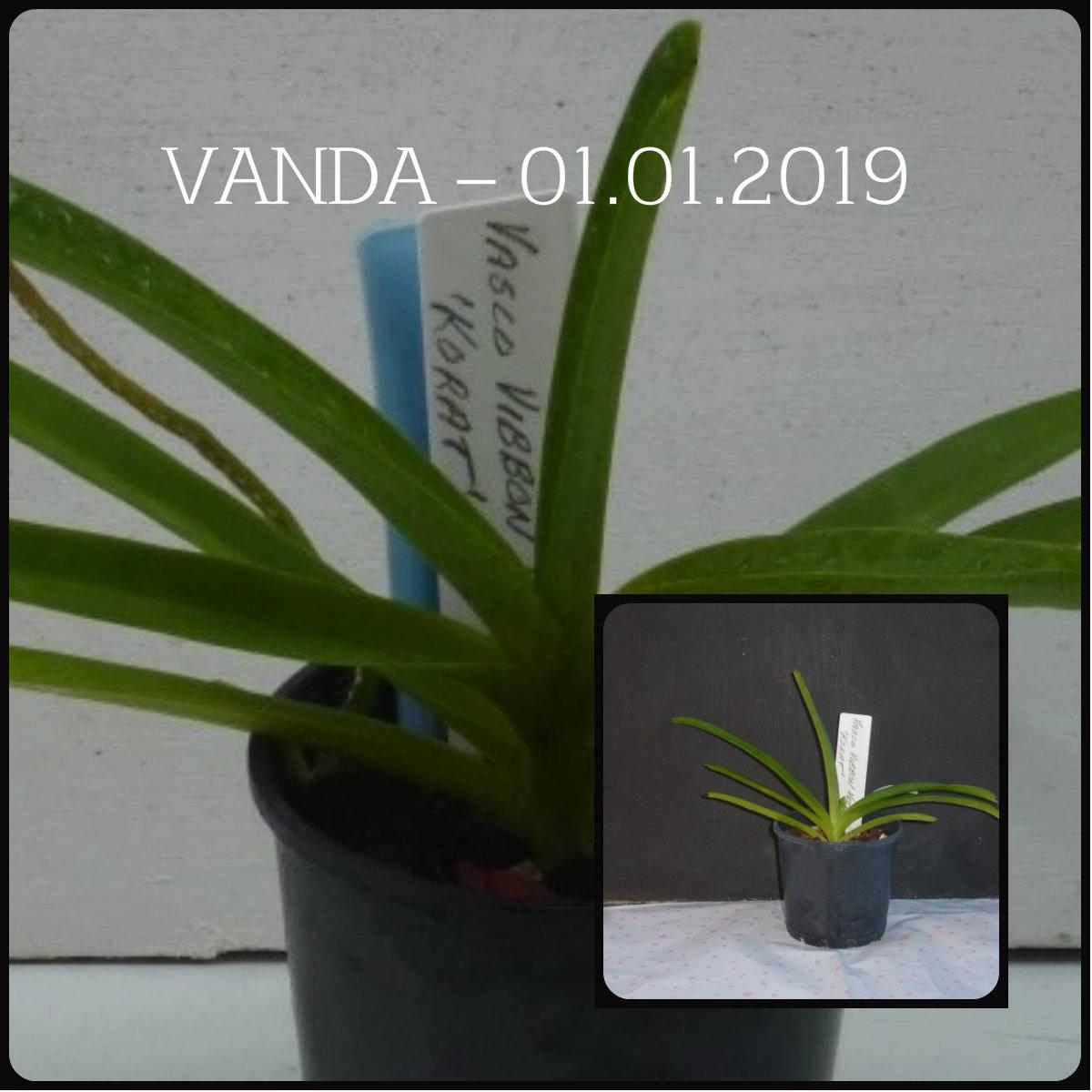 comparison vanda