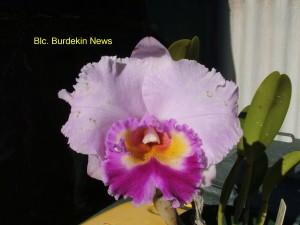 Blc. Burdekin News (1)
