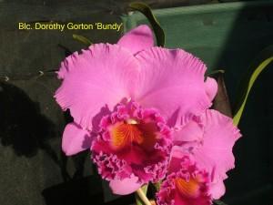 Blc. Dorothy Gorton 'Bundy'