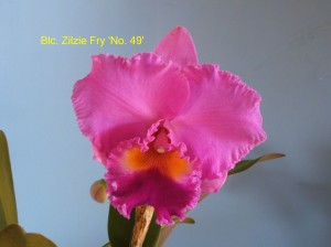 Blc. Zilzie Fry No. 49