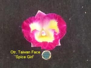 Otr. Taiwan Face 'Spice Girl'