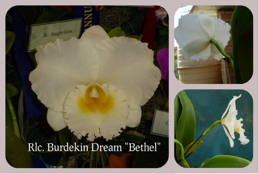 best orchid June