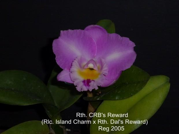 CRB's Reward 2