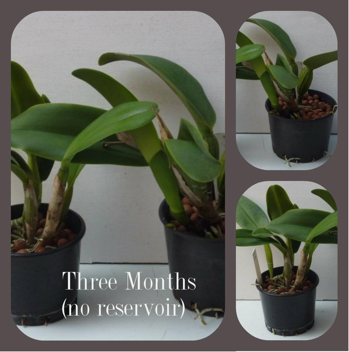 three months no reservoir